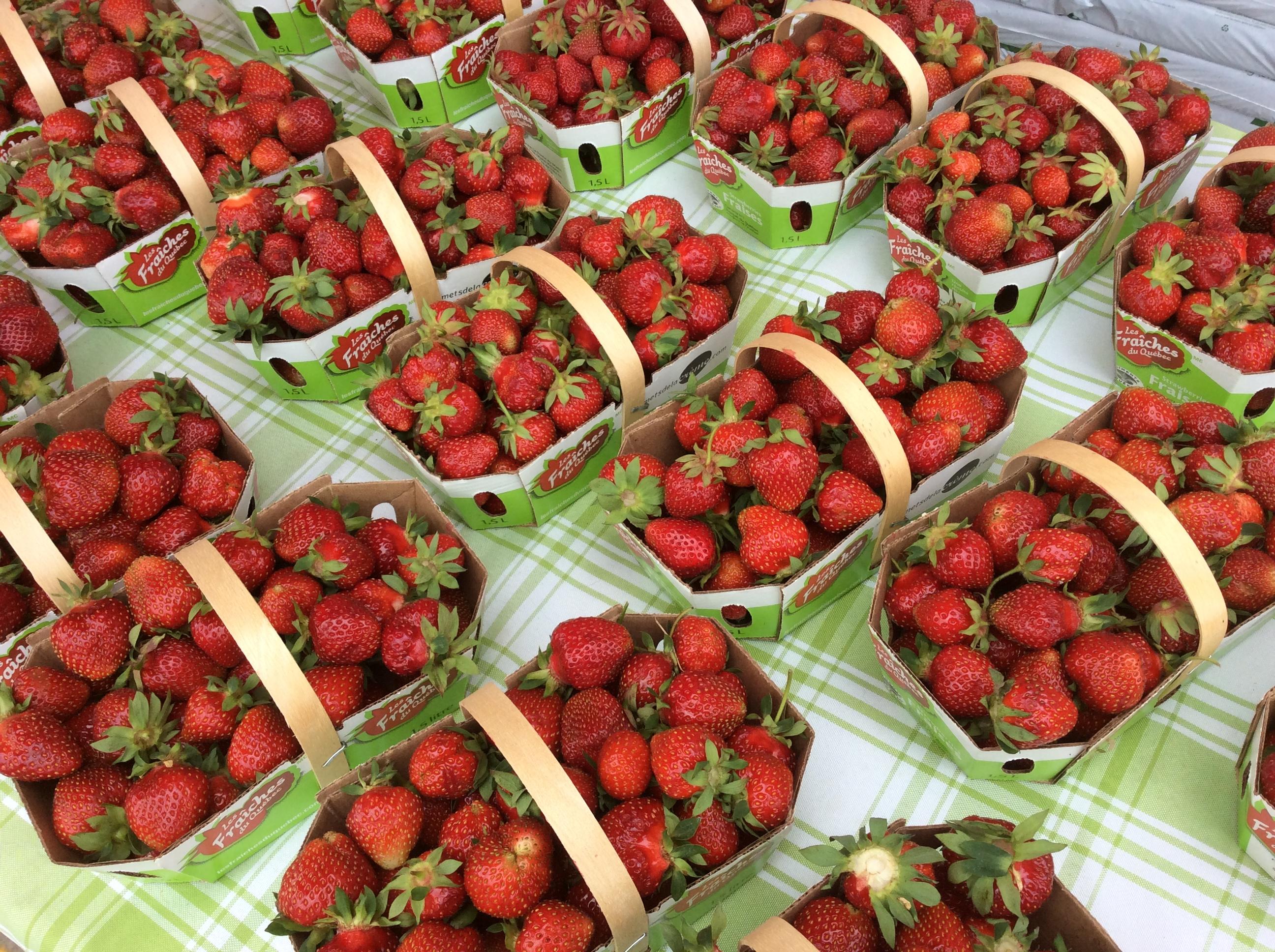 fraises lotbiniere